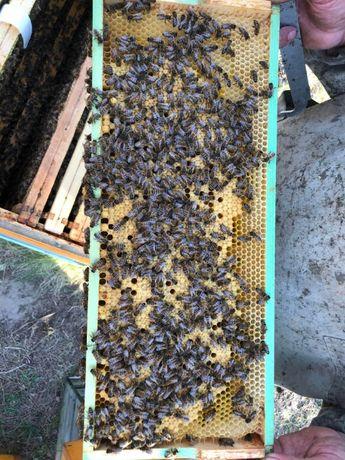 Rodziny pszczele na ramce Lanstroth ¾