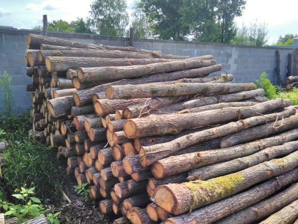 Słupy dębowe 300-600cm ogrodzenie na łosia, do chmielu fi 12-15cm