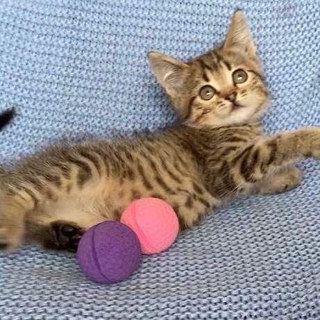 Котенок девочка в добрые руки