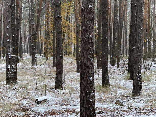 Участок в лесу в 6км от Киева. Вишенки, Гнедин, Осокорки