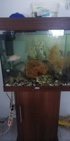 Juwel akwarium Lido 120 zestaw z szafką