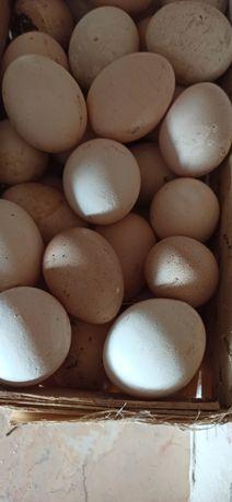 Swieze jaja wiejskie