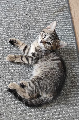 Kociaki szukają domu
