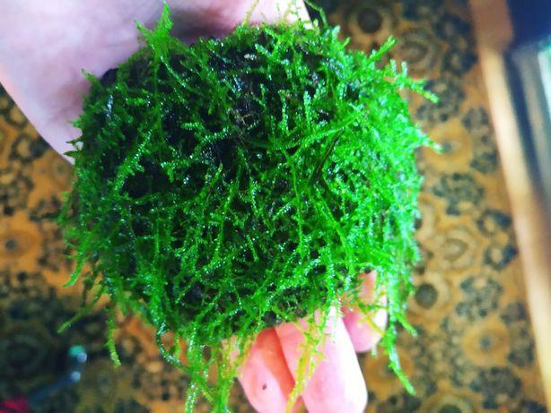 Mech Creeping Moss