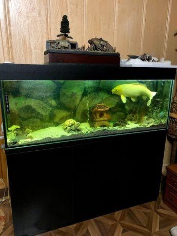 панорамный аквариум с декором и фильтром