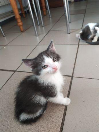 Віддам в добі руки котика