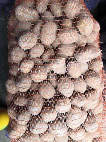 Ziemniaki sadzeniak VINETA