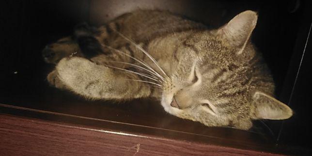 Zaginął 3 letni kot