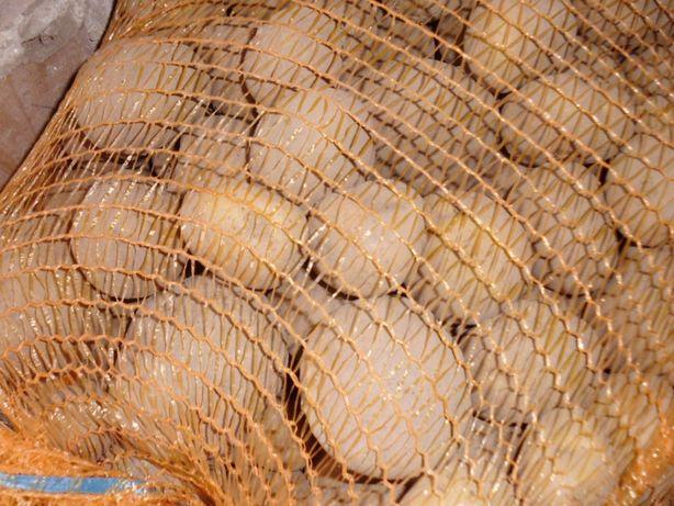 Pyszne Jadalne Ziemniaki Brydza Wineta Ekologiczne na zimę