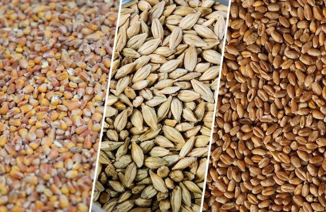 Зерно в ассортименте