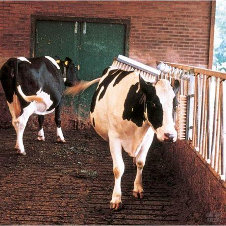 Czochradło dla bydła