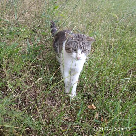 Znaleziono kota kocura