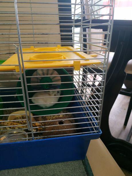 Хомячки и крысеныши Дамбо