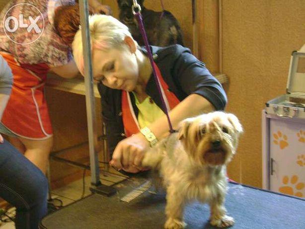 Kurs strzyżenia psów Kurs groomerski kurs groomingu mamy psy czwiczeń