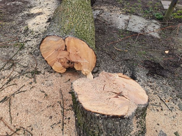 Drewno gruszy grusza bale