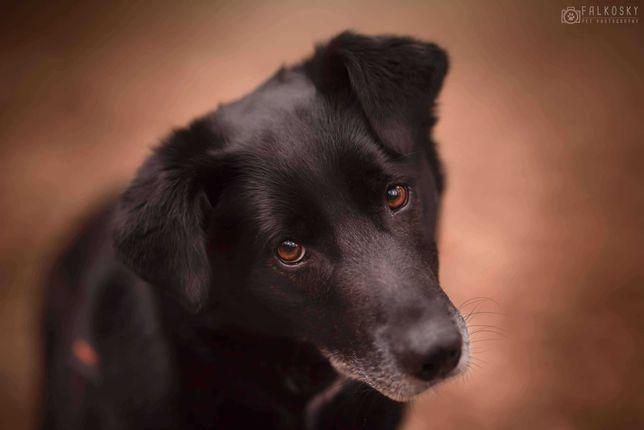 Sułtan przecudny pies do adopcji