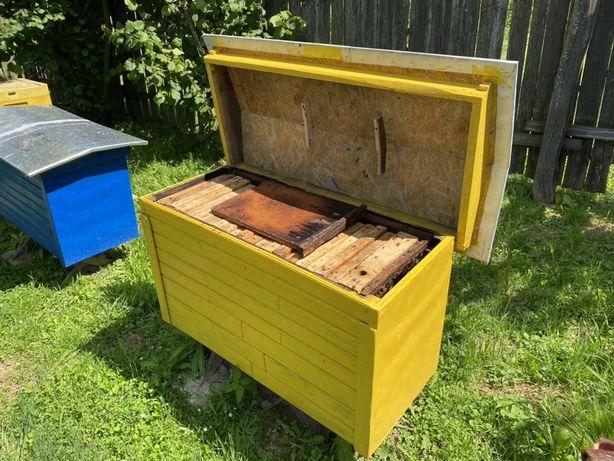 Rodzina pszczela z ulem