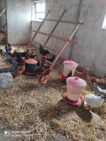 Jajka wiejskie..