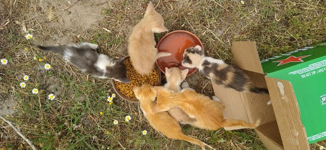 Gatinhos para adoção URGENTE com oferta