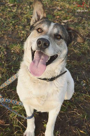 Barry, wesoły pies o cudownym charakterze, poleca się do adopcji!