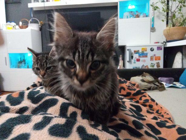 Dwa kociaki do adopcji