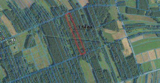 Działka leśna 1,14 ha z modrzewiem w miejscowości Zaczarnie