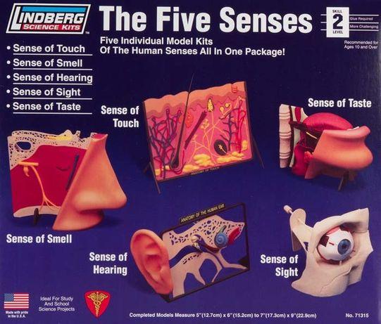 Model plastikowy Lindberg - 5 zmysłów Dotyk, Węch, Słuch, Wzrok, Smak.