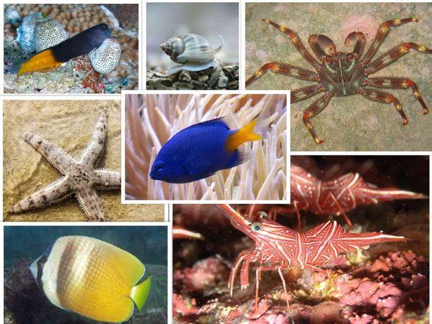 Ryby morskie różne gatunki