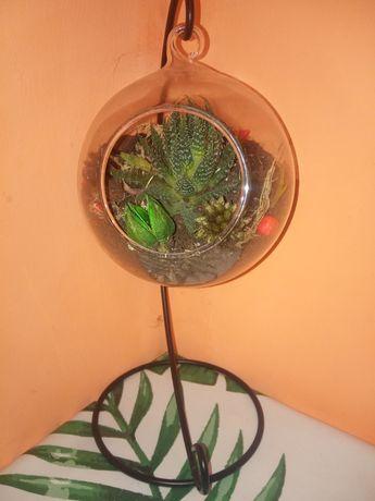Флорариум.Цветок в стекляном шаре на штативе.Живые цветы.