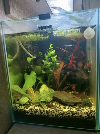 Kostka Aquael opti set 20 wraz z wyposażeniem i rybkami