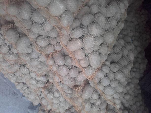 Sprzedam ziemniaki wczesne odmiany  Carella
