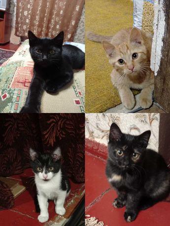 Котята - замечательные ребята