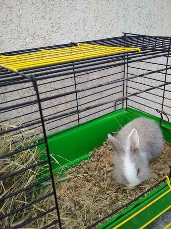 Кролик с клеткой