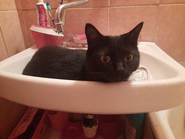 Отдам черную кошку, стерилизована, 2 года
