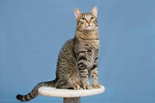 Отдам в хорошие руки молодого красивого кота Баюна .