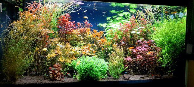 Spora ilość roślin około 8 gatunków za przysłowiowe grosze