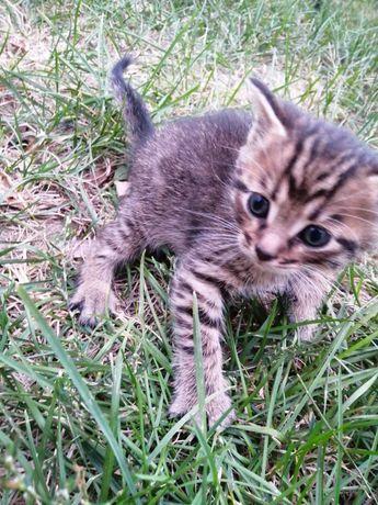 Крошки котята ищут дом