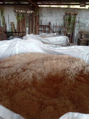 Serradura de pinho seco