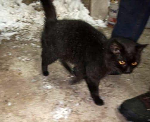 Czarny kotek/kotka znaleziony w Gródku