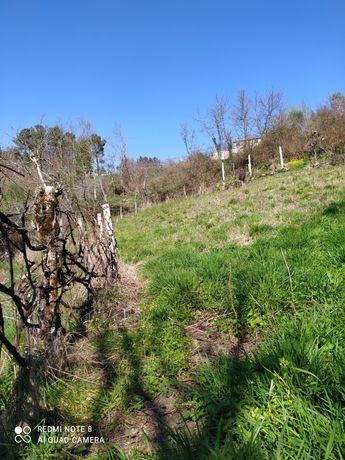 Terreno  com vinha e árvores