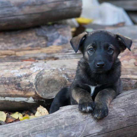 Черный мальчик щенок красавчик
