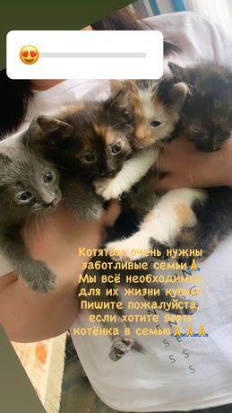Котик, котята, котёнок + всё необходимое ему