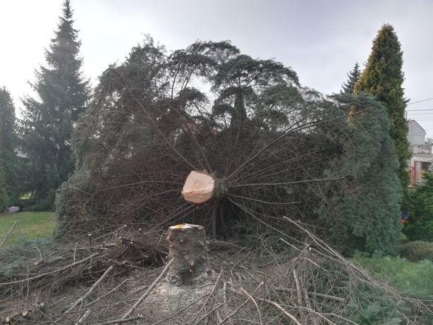 Wycinka drzew, koszenie trawy, karczowanie terenu