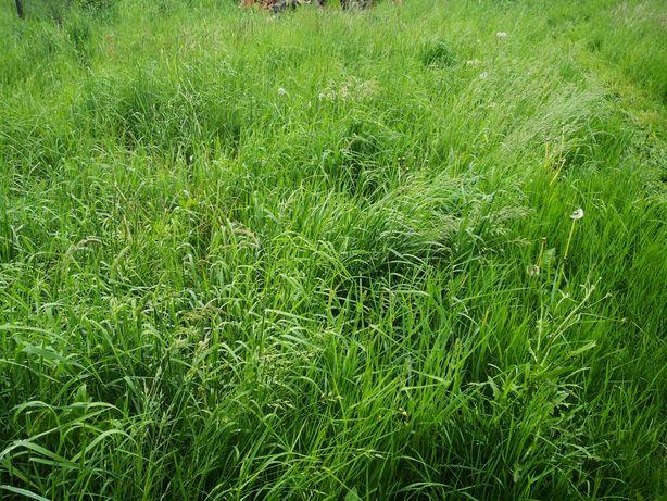 Trawa  łąka za darmo