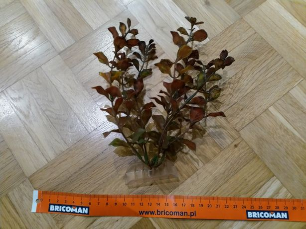 Roślina akwariowa - zielonoczerwone listki