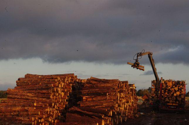 Drewno wałki drzewo TRANSPORT