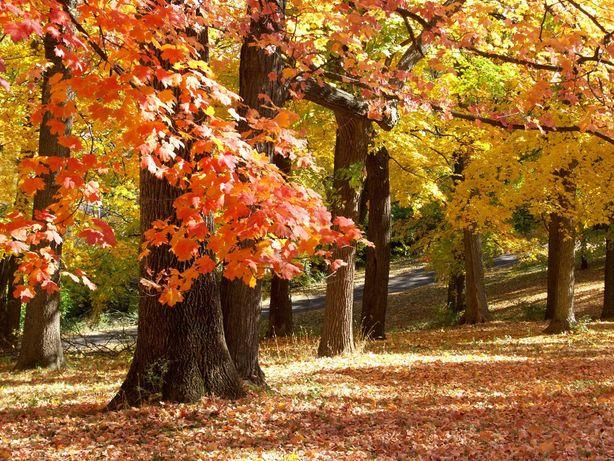 Jesienna Pożyczka