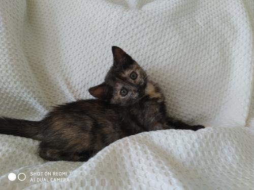Ищем дом котёнку
