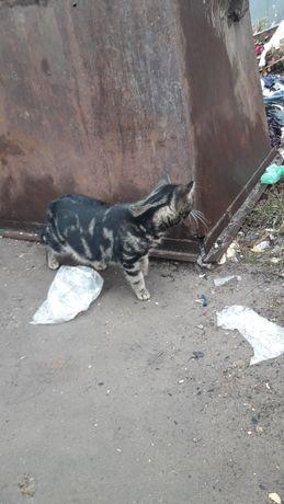ОЧЕНЬ нужен дом котику