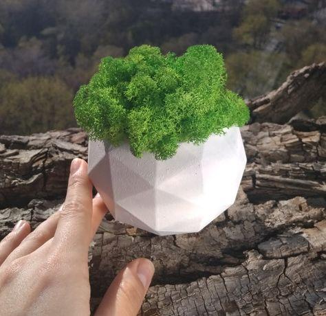 Эко-декор, стабилизированный мох в кашпо, необычный подарок